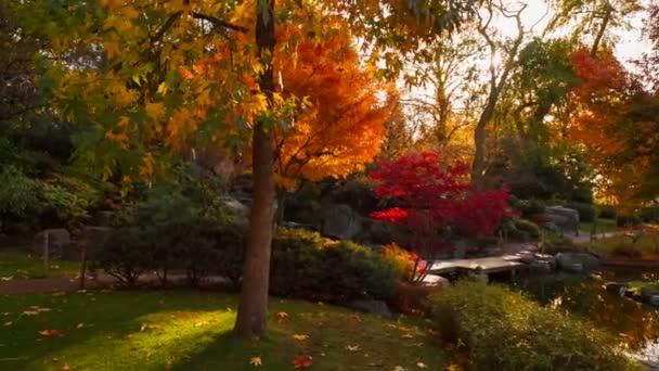 POV kolem krásné, svěží japonská zahrada s krásné červené, žluté a oranžové typické podzimní sezóny