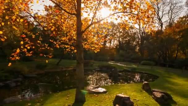 POV kolem krásné, svěží japonská zahrada s rybníkem, který odráží červené a oranžové odstíny podzimu