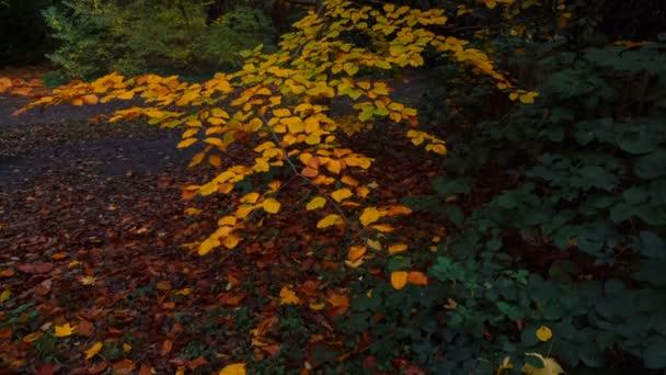 Japonská zahrada na podzim