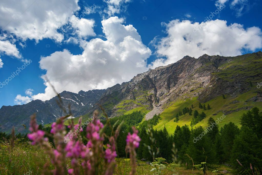 Panorama picture of a mountain landscape with alpine flowers