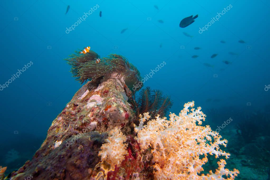 The colorful coral in the coral reef in Thailand's sea