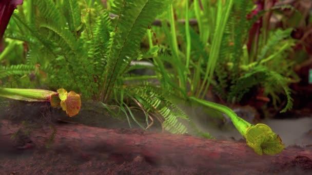 Nepenthes fleischfressende Pflanzen im Morgennebel im Regenwald