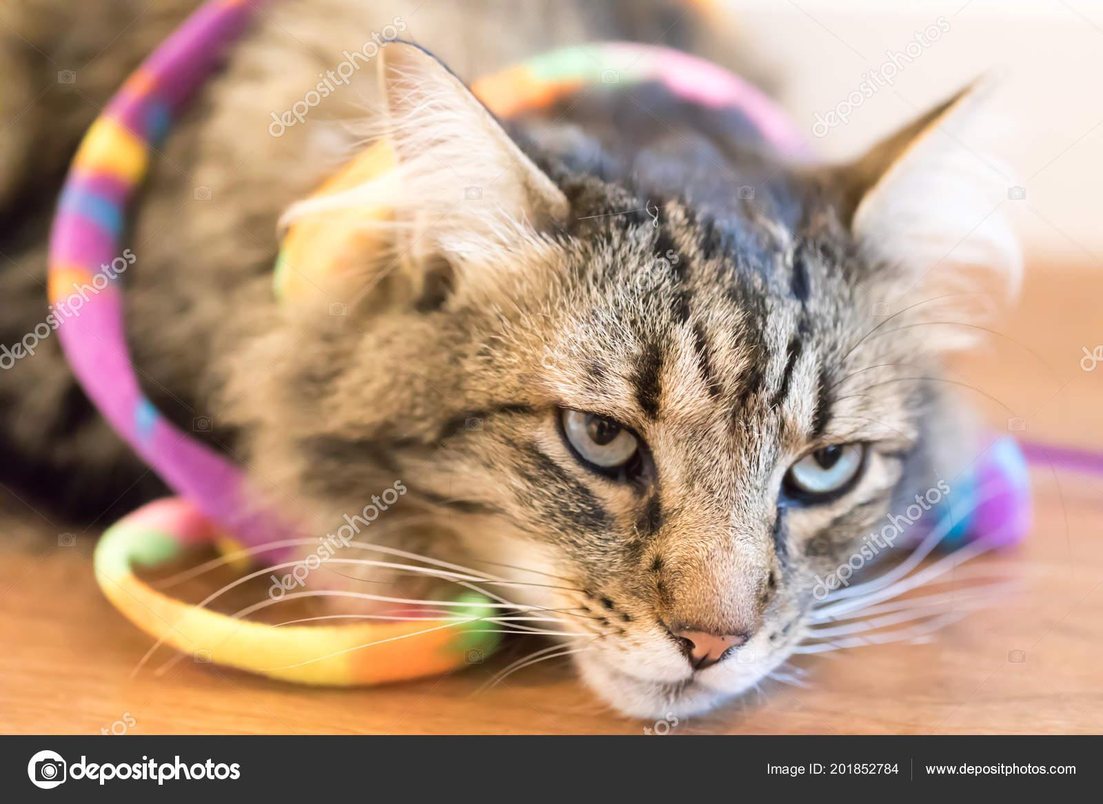 Pěkné těsné kočička fotky