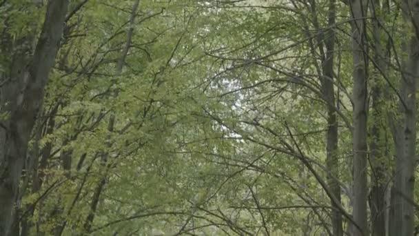 Magányos őszi alley. Ősszel. Őszi levelek háttér. Őszi fák színes levelekkel.