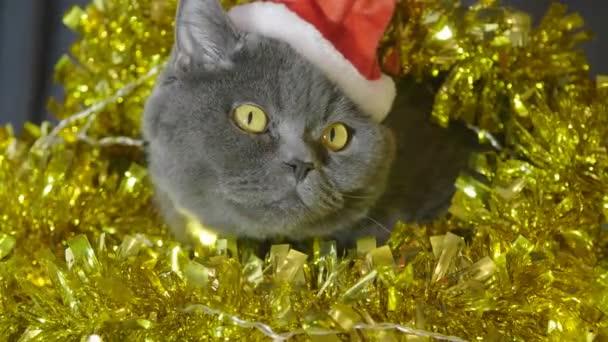 A red hat karácsony, Karácsonyi koszorú és talmi ül, és vicces látszó macska részlete. Piros karácsonyi kalap macska állat portréja részlete. Brit macska ünneplik a karácsonyt és új évet.