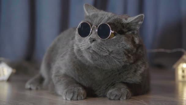 Közeli kép a macska ül a kis megvilágított karácsonyi sötét napos szemüveg házak cam vicces megjelenés. Állati portréja macska szemüveg. Brit macska ünneplik a karácsonyt és új évet.