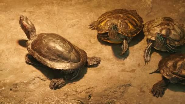 A teknősök csoport elszalad, más-más irányba.