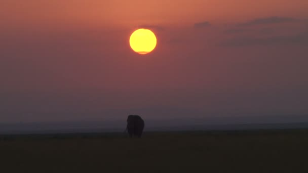 Egy elefánt állandó alatt a lenyugvó nap
