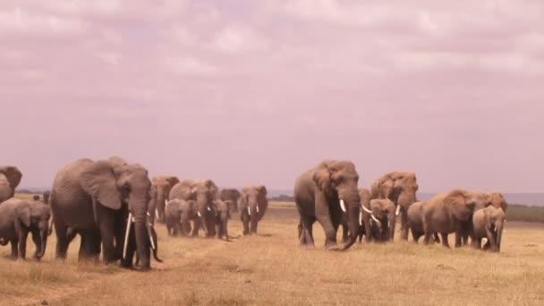 Nagyon sok elefánt címsor Amboseli mocsarak