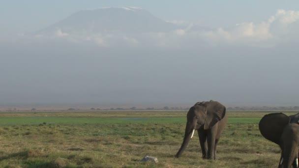 Kilimandzsáró kilátás nagyon kis mennyiségű hó