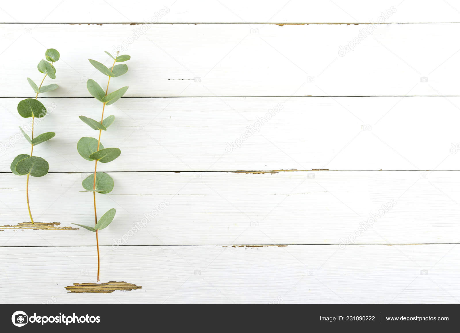 Spring plant over white rustic wooden background  Decorative