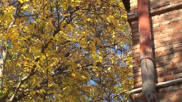 Podzimní žluté odstíny ořešáku u domu červených cihel s rezavou rybníčka