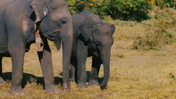 Krásný krásný obrázek, rodiny dvou divokých slonů, matka a dítě, klidně jíst zelené trávy v létě savany