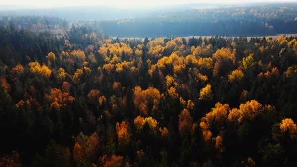 Drohnenflug über dunkelgrünen und gelben Bäumen, herrliches Herbstwaldgrün unter Sonnenaufgangshimmel.