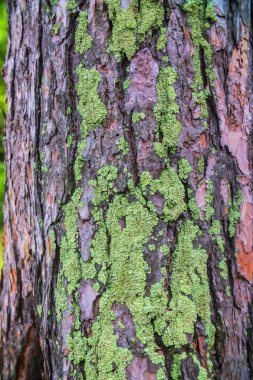 Close - up of green moss on the tree bark stock vector