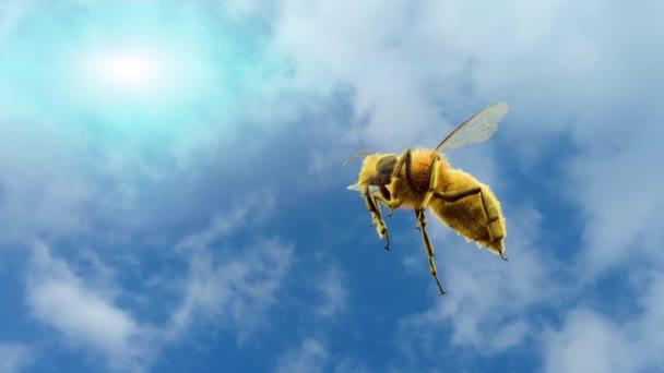 včela, letící na obloze na pozadí vykreslení 3d