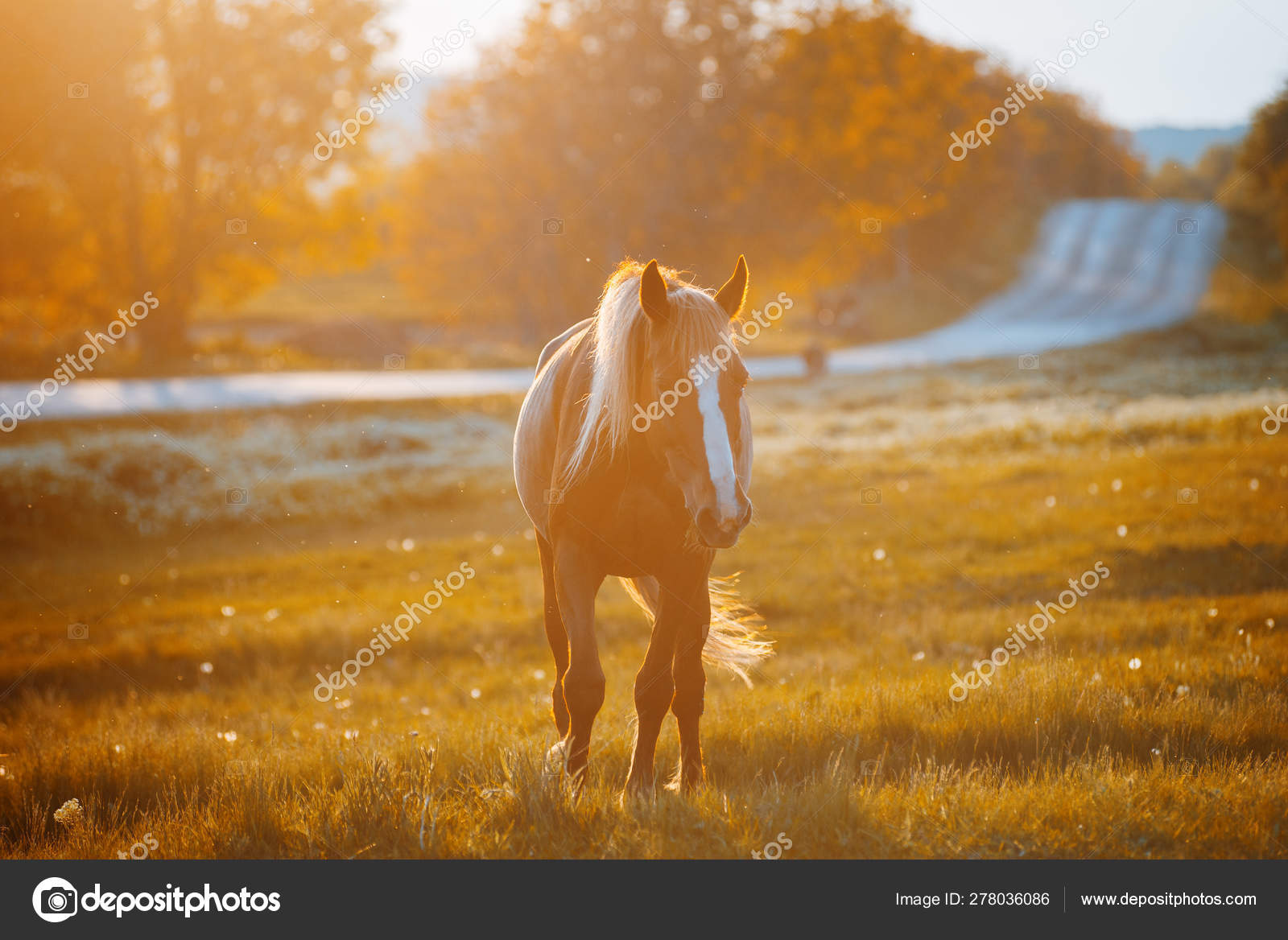 Photo Of Alone Beautiful Horse Walking Along The Road At Sunset Stock Photo C Cristalov 278036086