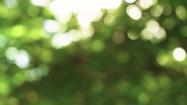 A nyári időszakban a zöld fák hátteréről készült homályos felvételek.