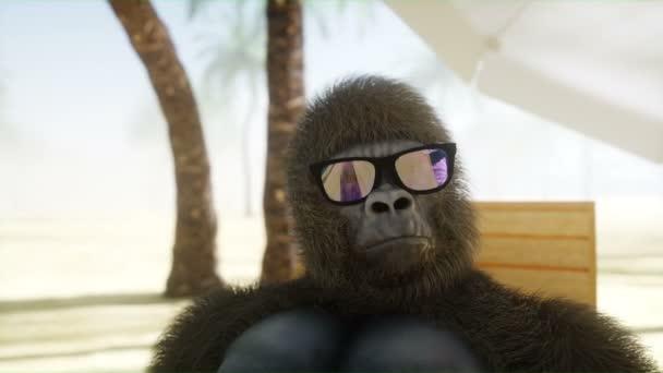 Legrační gorila v brýlích leží na relaxačním. Pláž a palmy. Lázně, resort koncept. Realistické animace 4 k.