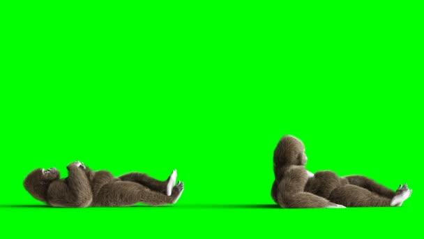 Funny hnědé gorila odstávky. Super realistické kůže a vlasů. Fabion 4k animaci.