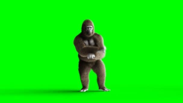 Vicces barna gorilla tánc. Super reális szőrme és a haj. Zöld képernyő 4k animáció.