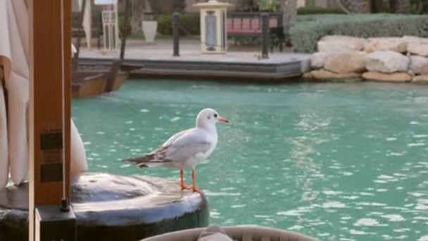 roztomilý Racek sedí na nábřeží říčky Severomořský kanál v denní v turistickém místě poblíž restaurace