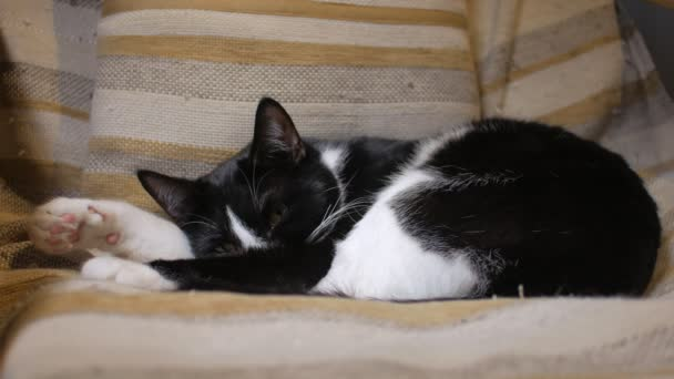 nice domestic cat is sleeping in cozy chair in home, black and white