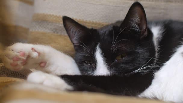 aranyos macska szunnyadó, egy széket, záró és nyitó szemem