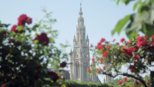 gothic style tower of town hall in Vienna, Austria, view through roses shrubs, focus is moving