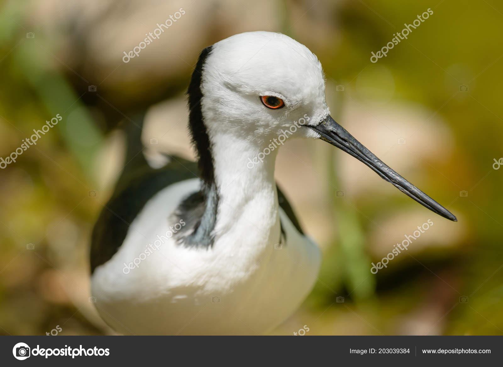 dlouhé bílé ptáky týrané ebenové porno
