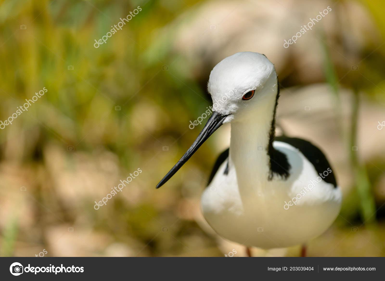 υγρό μαύρο πουλί