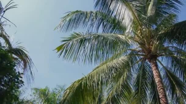 Velké palmové listy a palmami s modrou oblohou v pozadí