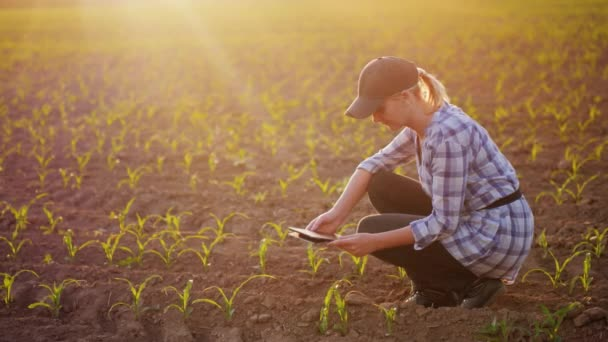A female farmer is working in the field at sunset. Studying plant shoots, photographing them using a tablet