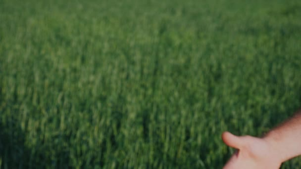 Friendly handshake of two male hands. Against the background of a green wheat field