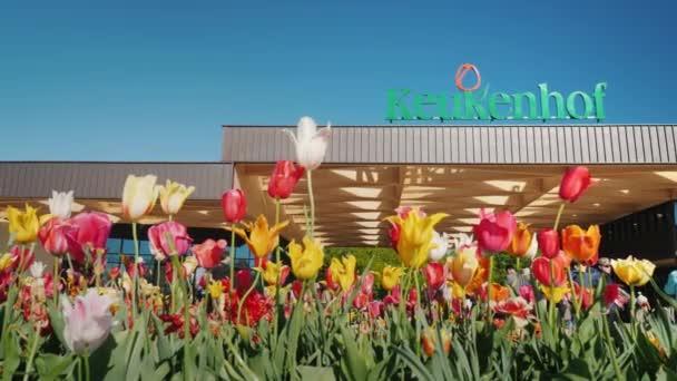 Keukenhof, Lisse Holandsko května 2018: Nejslavnější květinový park v Evropě je Keukenhof. V popředí jsou různobarevné tulipány, v pozadí znamení a vstup do parku