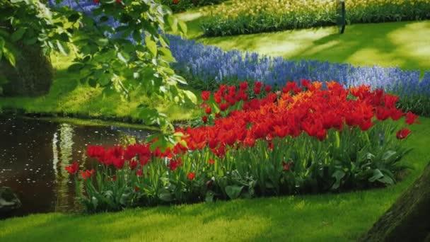 Červené tulipány jarní a levandule roste poblíž malého rybníčku. V parku Keukenhof v Nizozemsku