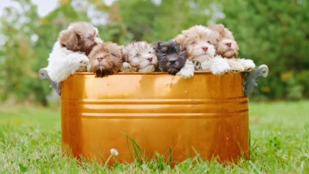 A brood of puppies sits in a bucket that stands on a green lawn