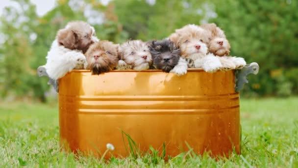 Chovná štěňata sedí v kbelíku, která stojí na zeleném trávníku