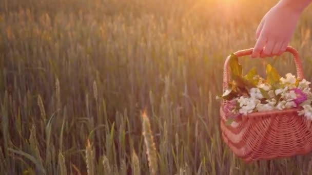 Žena nese v ruce košík s divokými květy. Je zelená louka, krásné odlesky slunce. Romantická procházka koncept