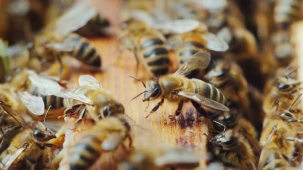 The bees are working inside the hive. Useful food and traditional medicine