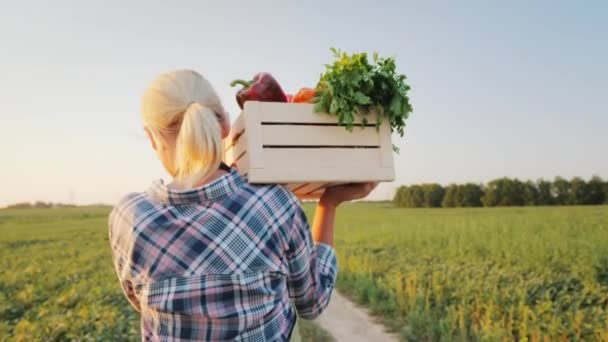 A female farmer with a box of fresh vegetables walks along her field. Healthy Eating and Fresh Vegetables. Back view