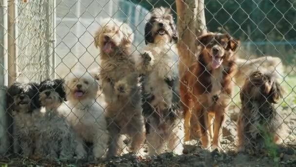 Eine Gruppe Hunde schaut durch das Netz der Kinderstube
