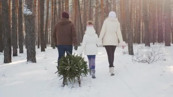 Ein Ehepaar mit Kind spaziert durch einen verschneiten Wald, ein Mädchen schleppt einen Schlitten mit Weihnachtsbaum. Heiligabend und Silvester. Rückansicht