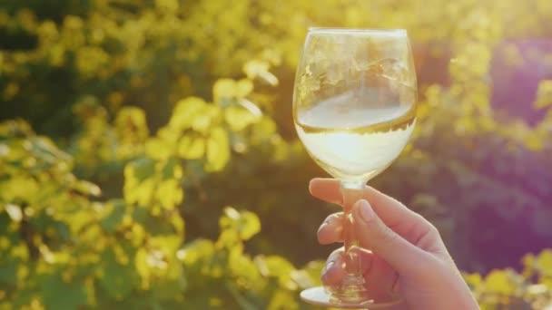 eine Hand mit einem Glas Weißwein, schüttelt sie sanft vor dem Hintergrund des Weinbergs. Weinprobe im Weingut