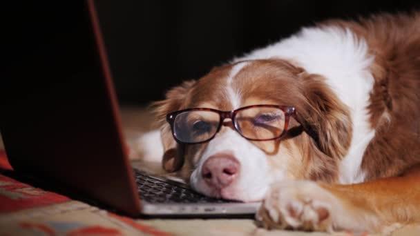 Szemüveg egy kutya alszik közelében egy laptop. Túlerőltetés munka fogalmát: