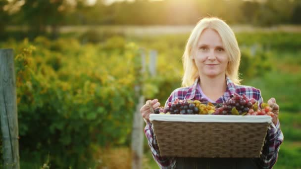 Portrait of an attractive farmer with a basket of grapes. Smiles, looks into the camera