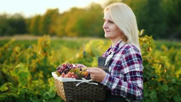 Nő a gazdálkodó egy kosár szőlőt megy végig a szőlő
