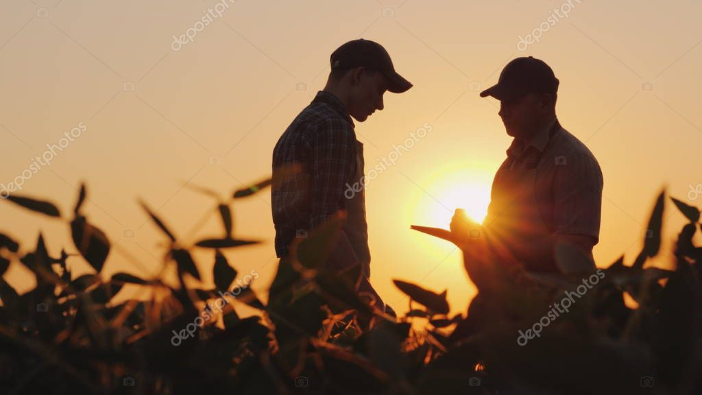 Two farmers talk on the field. Use a tablet