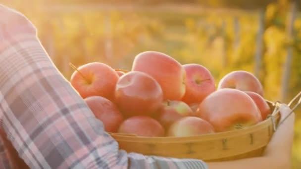 Farmář se nese košík s čerstvým pečená jablka. Organické produkty z farmy zahradní koncepce. Zadní pohled