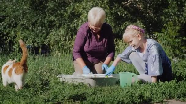 An elderly woman with her granddaughter together transplanted flowers in the yard. A red cat is walking nearby